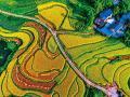 中国地质调查成果快讯:土地质量地球化学调查为浙江富硒农产品开发提供依据